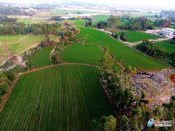 首届晋江农业嘉年华即将起航 东石田园15公里徒步喊你