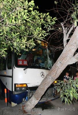 追尾后失控大客车撞树 图高清图片